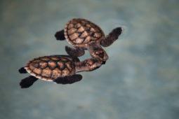 Gili Asahan Eco Lodge & Restaurant Lombok Turtles